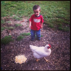 Hanging with the chickens