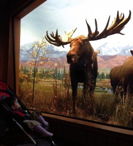 Taking in the scenery at the Carnegie Museum of Natural History
