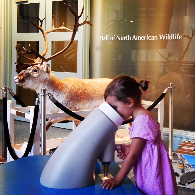 Discovery Basecamp at the Carnegie Museum of Natural History