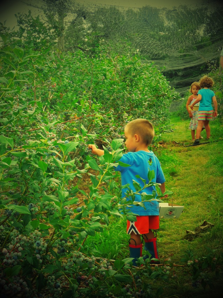 Berry picking at Soergel Orchards