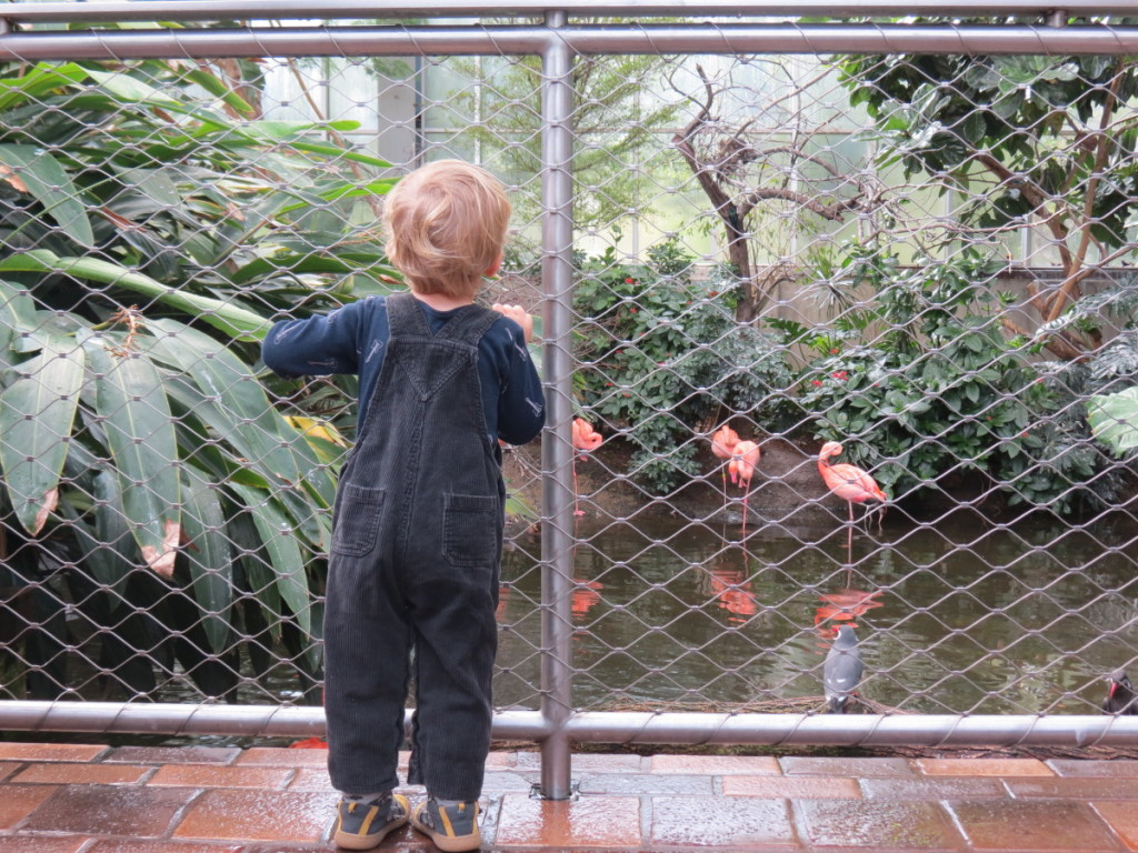 Early learner programs at the National Aviary, Photo courtesy of National Aviary